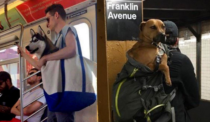 NEW YORK CITY MTA Says Dogs Must Fit In A Bag To Ride The Subway - Nyc subway bans dogs unless fit bag new yorkers reacted